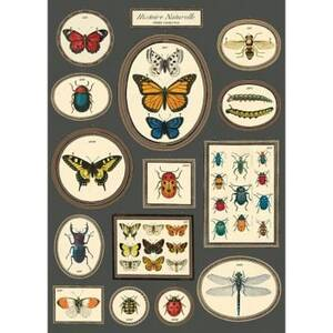 Natural History Butterfly And Insects Flat Wrap